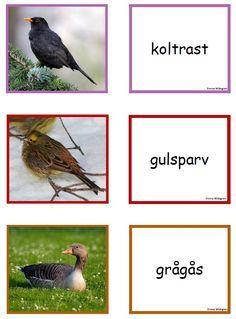 fågel memo