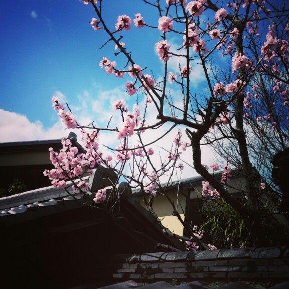 Cherry tree in Nara. © Barbara Mazzei