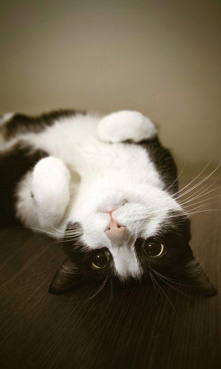 black  white kitty...so cute