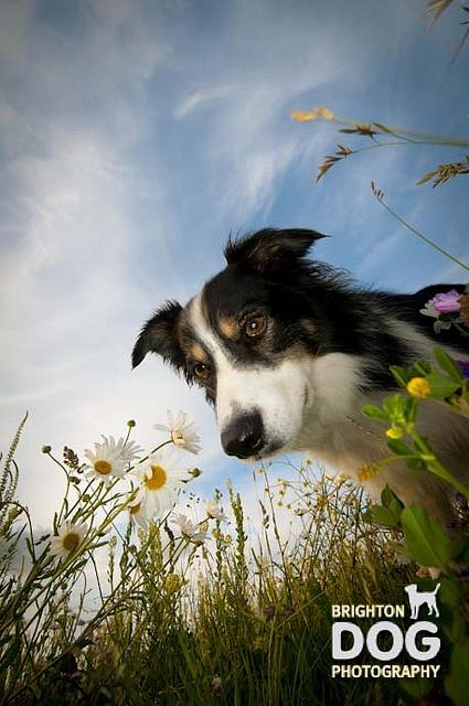 Brighton Dog Photography