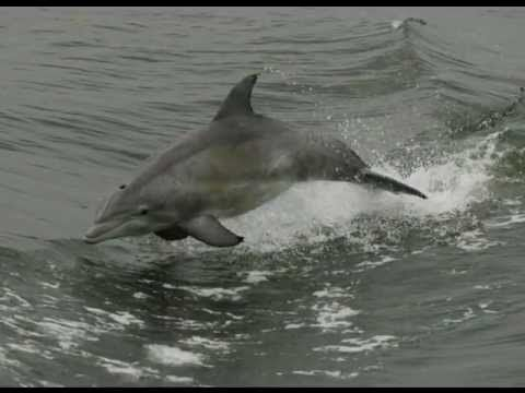 Rudee Inlet Dolphin Tours