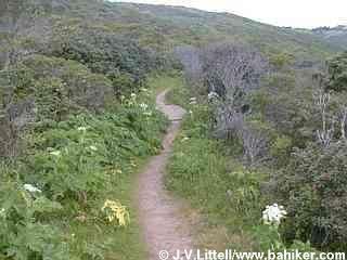 Summit Loop Trail, San Bruno Mountain Park, San Mateo County. 3.5 mi easy loop hike.