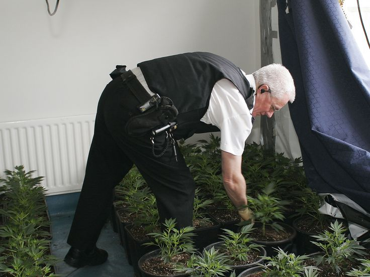 One million hours of police time are being wasted each year on policing the ban on smoking cannabis, the Liberal Democrats say. Research by the party drawn from official figures shows a total of 87,247 police caseloads relating to the drug were opened in 2015, with the average cost to the taxpayer per case estimated at £2,256.  The estimate says that in total £31m was spent on 1,044,180 police hours.