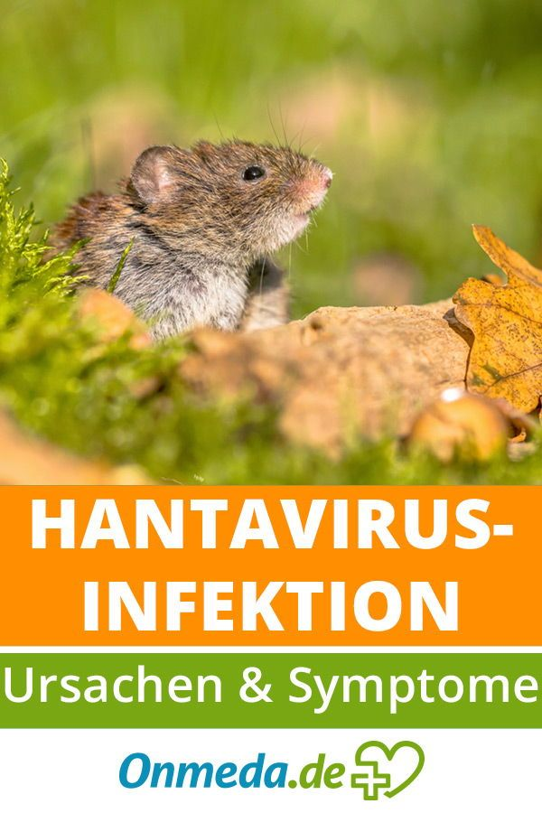 Hantavirus-Infektion: Symptome & Ursachen | Erkrankungen ...