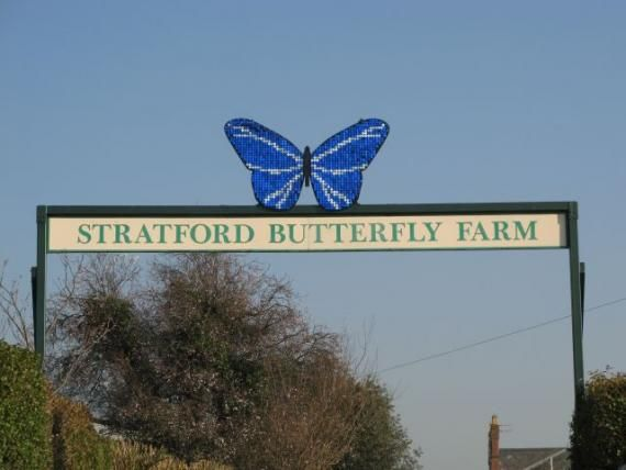butterfly farm stratford - Google Search