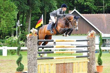Balou du Rouet, Oldenburg Stallion, Bay, *1997, 16.3h