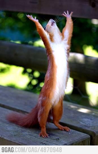 12 best Oliver images on Pinterest | Squirrels, Funny ...