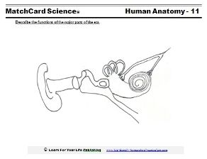 Listen Up!  There's lots of way to teach about the human ear and hearing.  Activities and worksheet included.