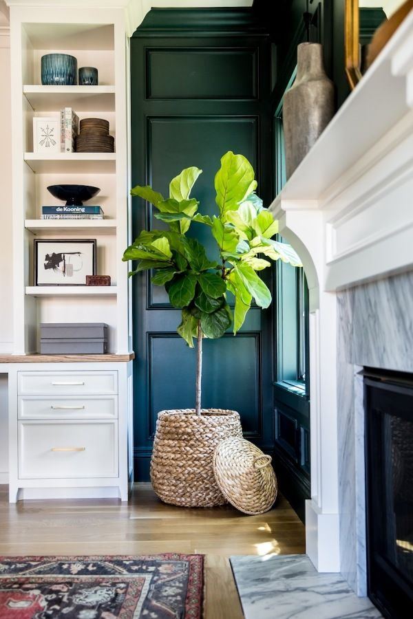 Fiddle leaf fig plant: http://www.stylemepretty.com/living/2016/06/15/a-home-thatll-make-any-white-paint-lover-turn-to-the-dark-side/ | Photography: Lindsay Salazar - http://www.lindsaysalazar.com/