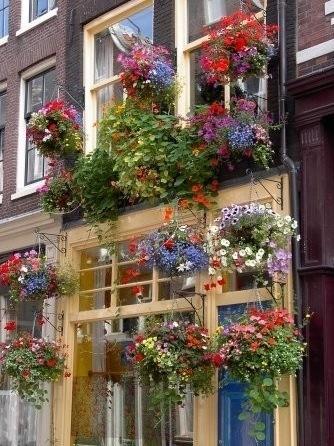 dream window boxes