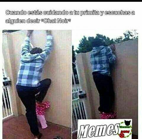 Imagenes Y Memes De Miraculous Ladybug - #11 - Wattpad