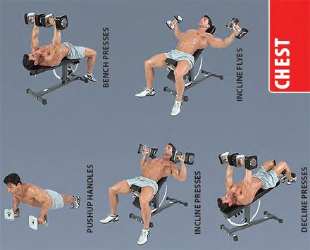 dumbbell-chest-exercises | Best Diets and Exercises ...