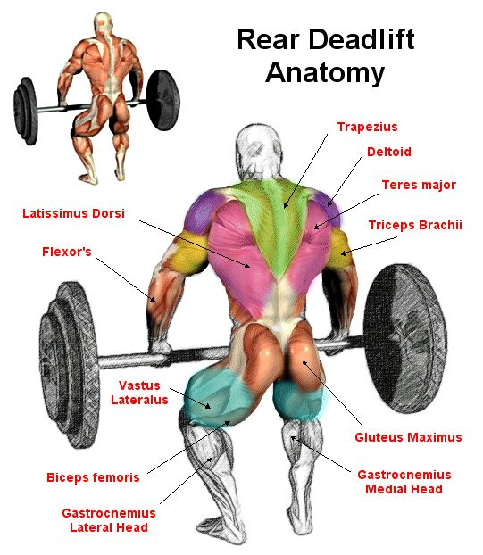 Muscles Used In A Deadlift. THIS Is Why They're One Of The ...