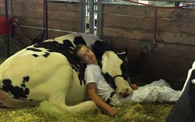 Mitchell Miner, de 15 anos, acabou adormecendo no colo de sua  vaca , Audri. Iowa, EUA.