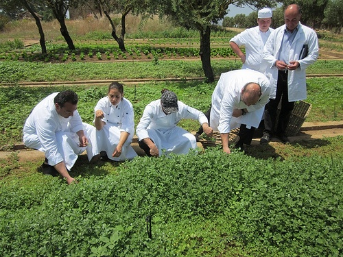 Vegetable garden : The varied menus created especially for Omega, include Costa Navarino's own products from its herb and vegetable gardens, as well as locally sourced ingredients, which have always formed an essential part of the Greek diet #Greece #Costanavarino #Garden