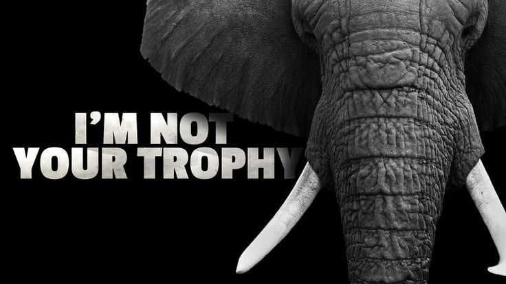 "H.R. 226, the African Elephant Conservation and Legal Ivory Possession Act would legalize the importation and possession of ivory, allowing hunters that kill elephants to bring their ""trophies"" home to the US. This bill is purely a gift to trophy hunters and serves no scientific, educational or conservation..."
