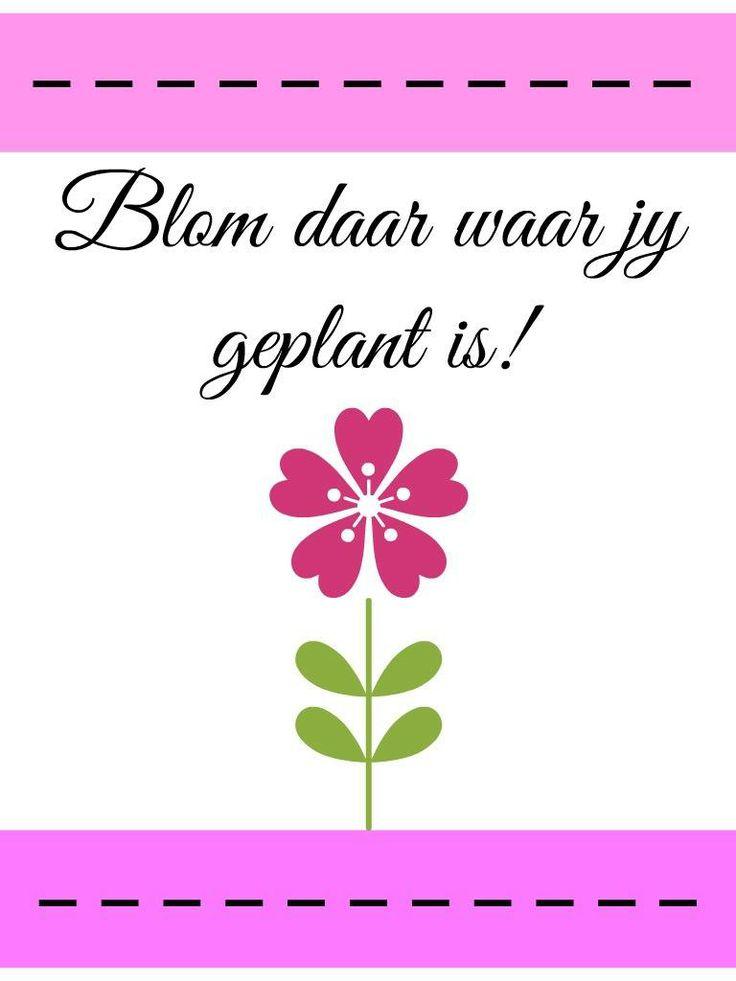 Blom daar waar jy geplant is!