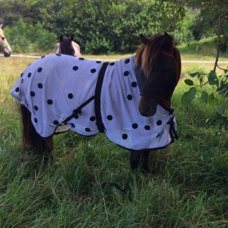 Pixi in her polka #horses #friday #erasmusrick #pony