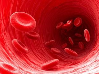 Does Your Blood Type Determine Your Optimal Diet? ~ #MarksDailyApple #MarkSisson