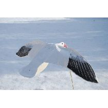 Sillosocks Flapping Snow Goose - 5 PACK