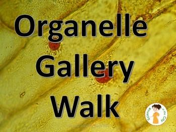 wholesale diamond Organelle Gallery Walk with Posters A great way to teach or review the cell organelles for students