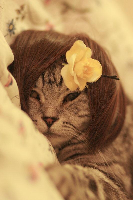 haha I love cats too much