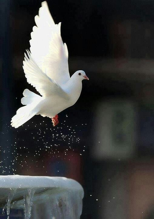 Kind of the form that I want my dove to be