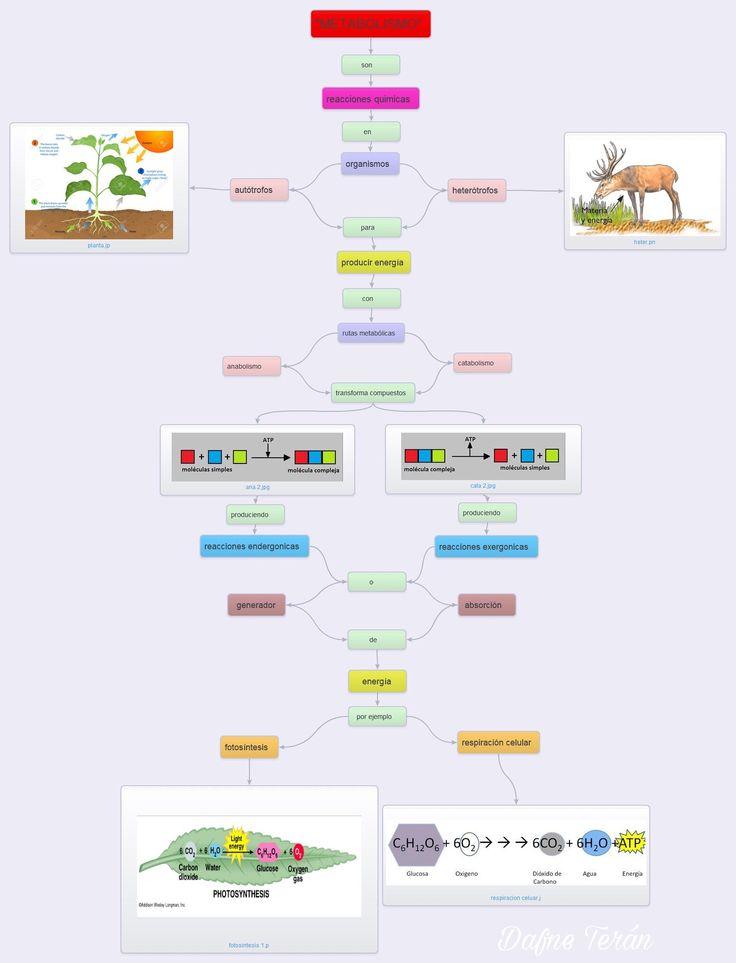 Metabolismo /catabolism /anabolismo/respiración celular..
