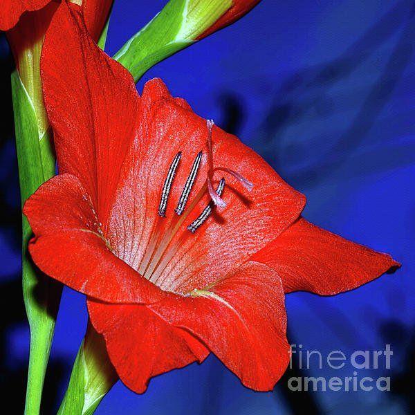 Kaye Menner Kayemenner Twitter Photography Prints Art Floral Photography Art Prints For Sale