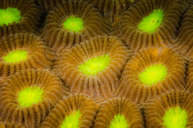 Soft Coral - Soft Coral