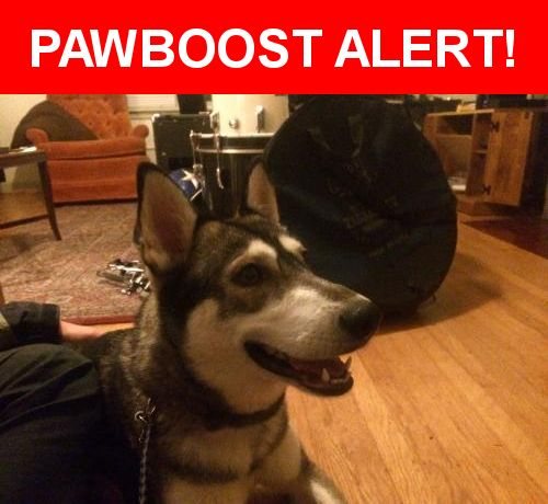 Is this your lost pet? Found in Portland, OR 97212. Please spread the word so we can find the owner!  Possibly a husky  Nearest Address: Near NE M L King Blvd & NE Monroe St