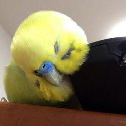 鳥フォトコンテスト「きなちゃん」さん