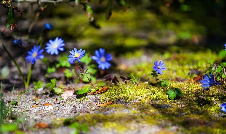 Spring Wild Flowers Photograph by Jenny Rainbow