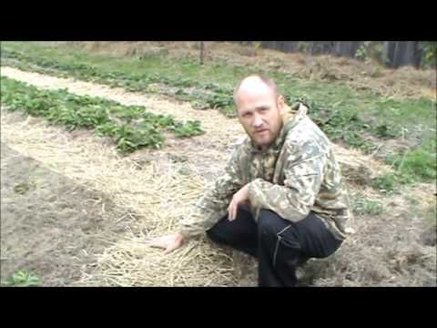 Природное земледелие Плодородная земля за три года из глины! Верхозин Юрий - YouTube
