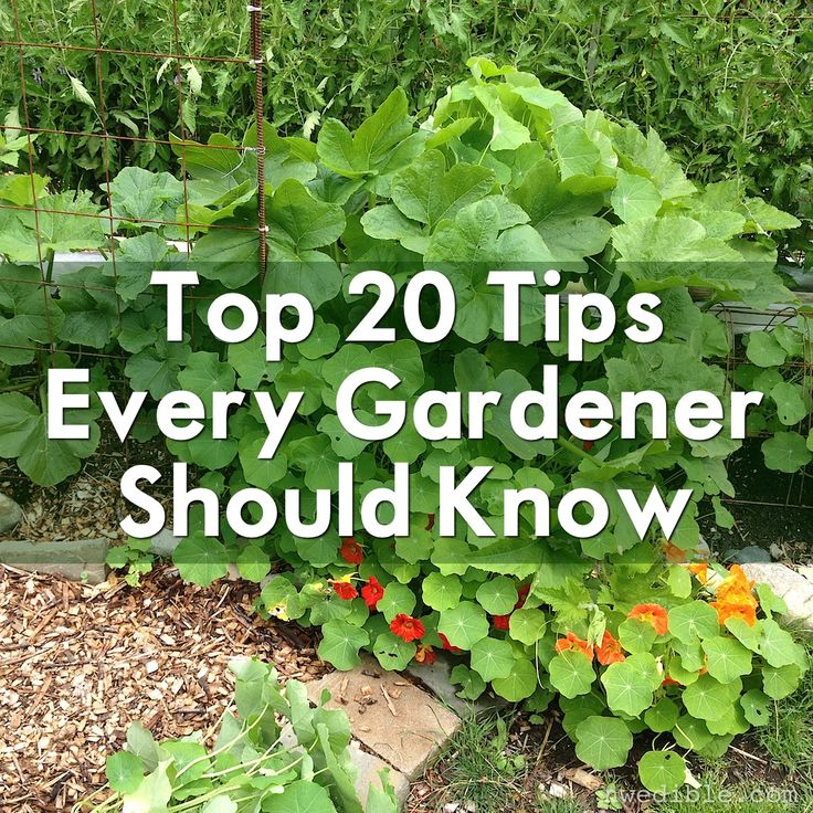 Iu0027ve Handed Out A Lot Of Gardening Advice In The Years Iu0027ve Been Writing  Here, But Some Tips Are Just So Timeless I Find Myself Coming Back To Them  Over And ...