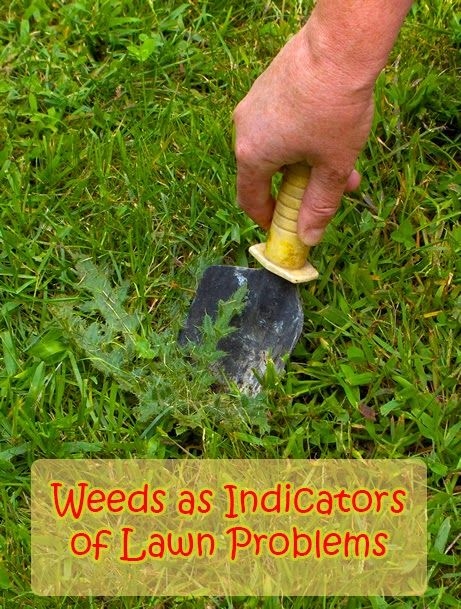 Weeds as Indicators of Lawn Problems -  Better check this as I have a lot more weeds than lawn . . .