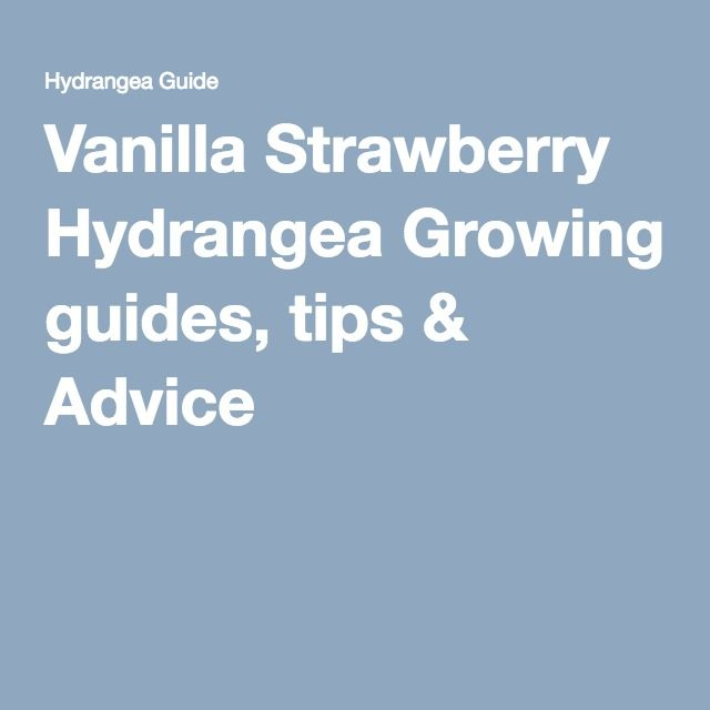 Vanilla Strawberry Hydrangea Growing guides, tips & Advice