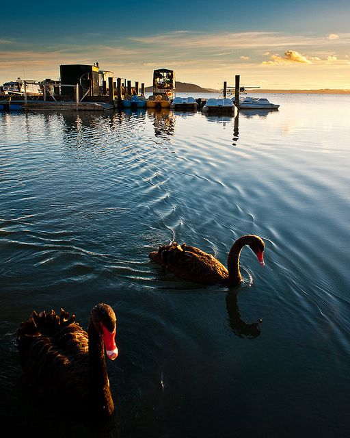 Lake Rotorua , Ohinemutu, Rotorua, New Zealand