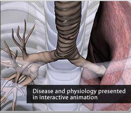 Strumenti per insegnare l'anatomia umana in 3D