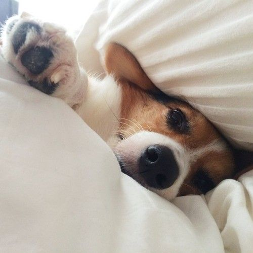 Mom...hit the snooze...