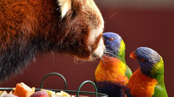 That's my fruit!
