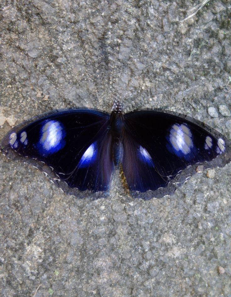 roarforpaws.com Butterfly Effects