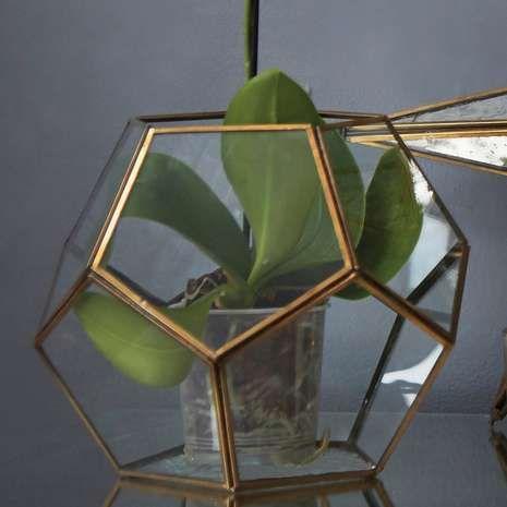 Gold Edged Glass Terrarium