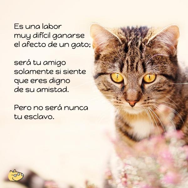 Frases de gatos - ExpertoAnimal                                                                                                                                                                                 Más