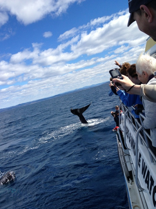 Whale watching with Cat Balou Cruises, Eden NSW