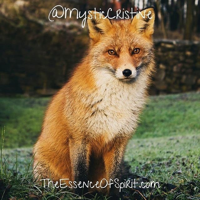 Fox Camouflage Observe Undetected Adaptability Assimilation When You Become Invisible You Can See Through O Animals Foxes Photography Kittens And Puppies