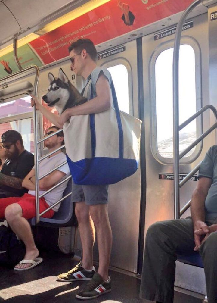 Clever Guy Carries His Husky in a Giant Tote Because NYC Subway Only Allows Dogs in Carriers