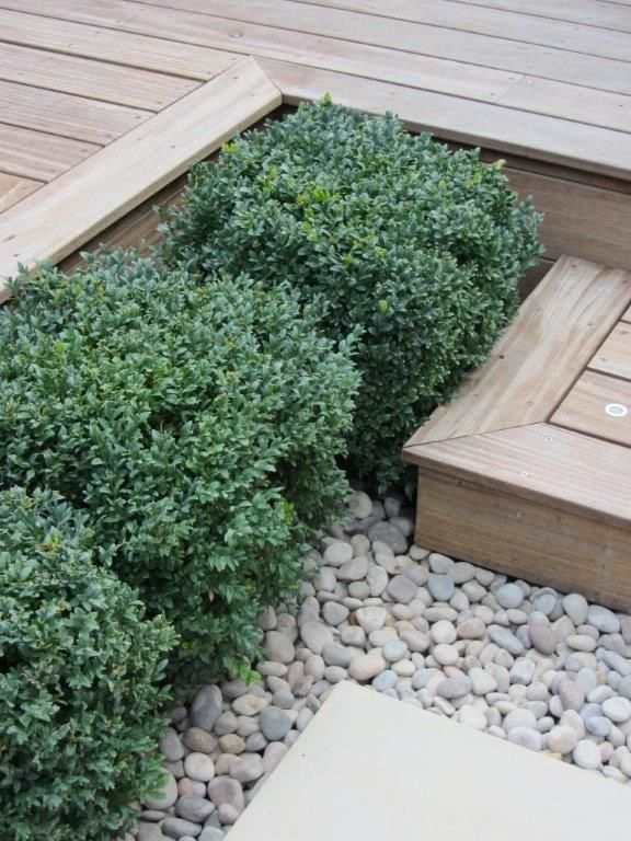 step detail with structural planting
