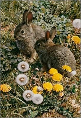 The Carl Brenders - Colorful Playground - Cottontail Rabbit and Dandelion painting is now published as a giclée on canvas hand signed by the artist. Canvas size: 19 x 13. A great Cotten tail bunny rab