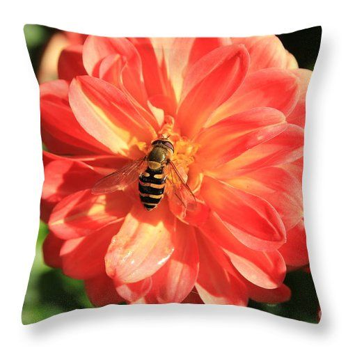 Flowers Fly Throw Pillow featuring the photograph Flowers Fly On Dahlia 4 by…